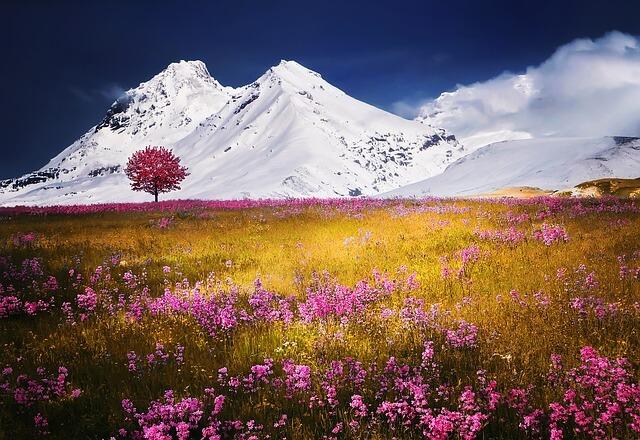 הרים מושלגים ופריחה