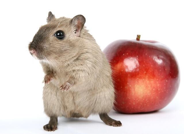 אוגר ותפוח
