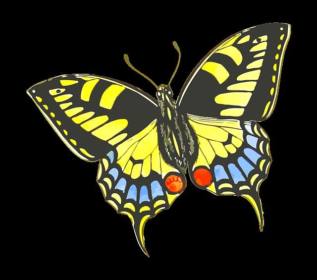 פרפר צבעוני