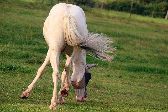 תמונה של זנב סוס