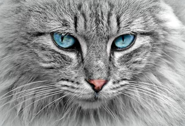 תמונה של חתול