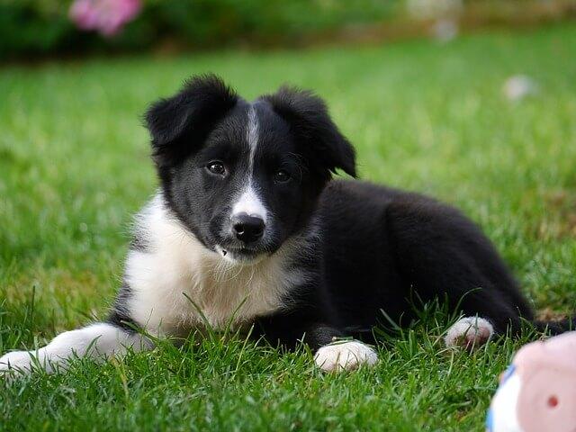 כלב קטן