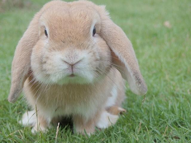 ארנב חמוד