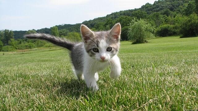 חתלתול בטבע