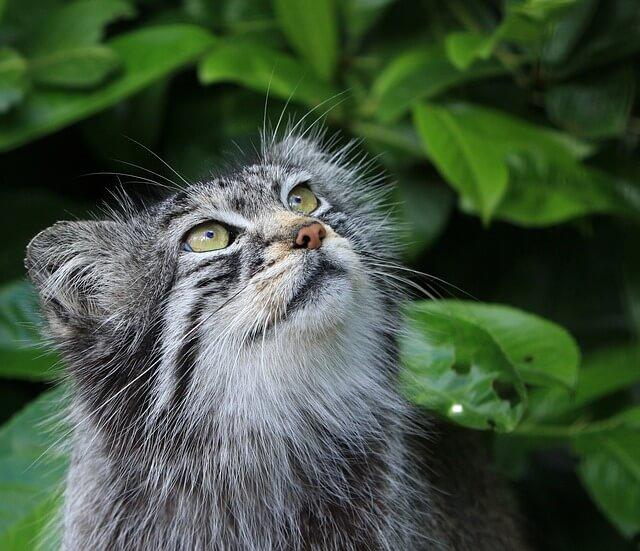 חתול בטבע
