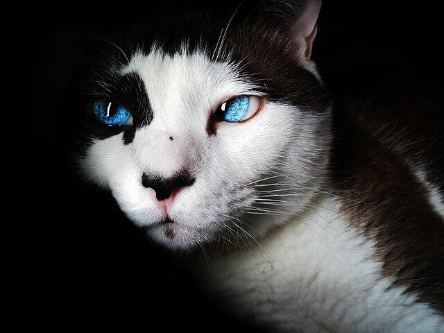 חתול בחושך