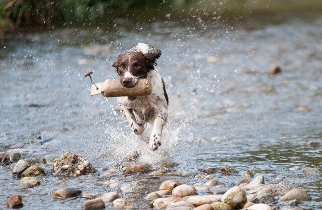 כלב במים