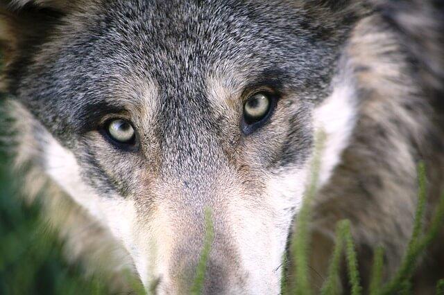 עיניים של כלב