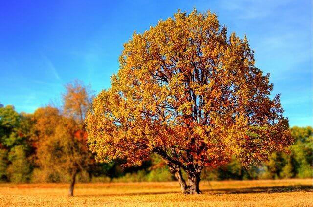 עץ בסתיו