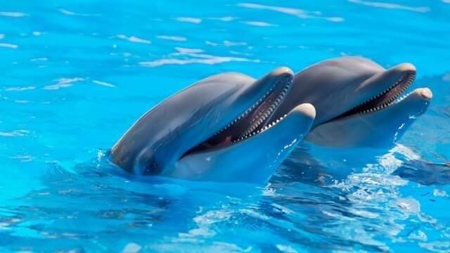 תמונה של דולפינים