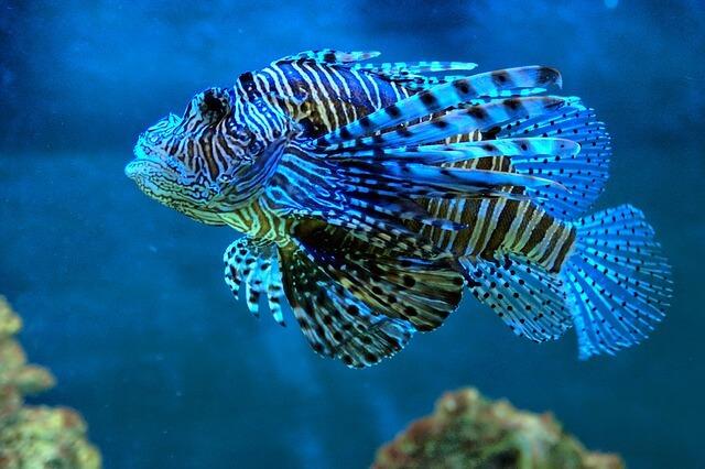 דג מגניב