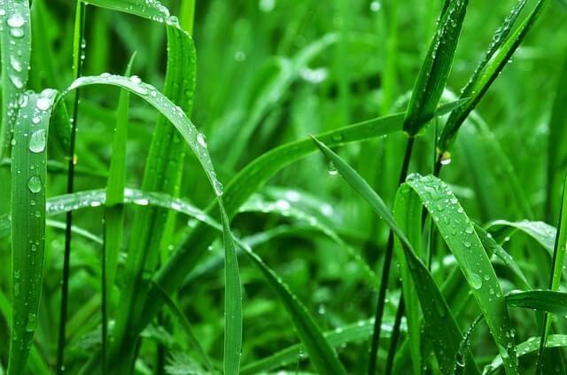 טיפות גשם