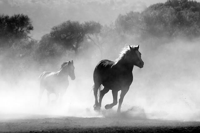 סוסים דוהרים