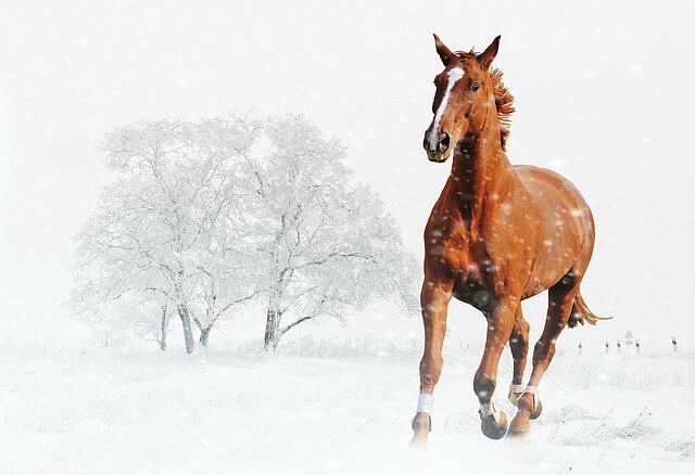 סוס בשלג