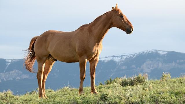 סוס בהרים