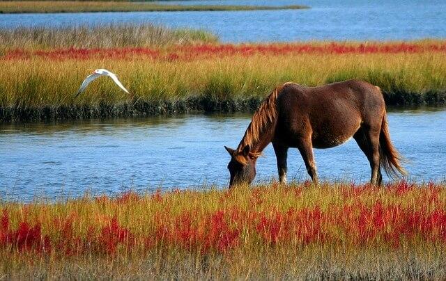 סוס בטבע