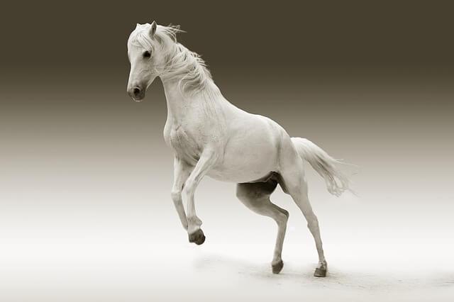 סוס עם רקע