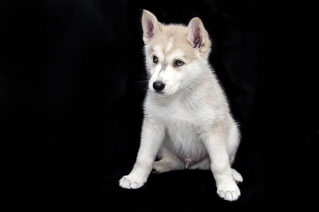 גור כלבים חמוד 2