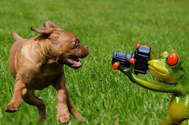 כלב מצחיק
