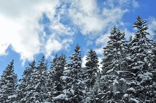 עצים מושלגים בחורף