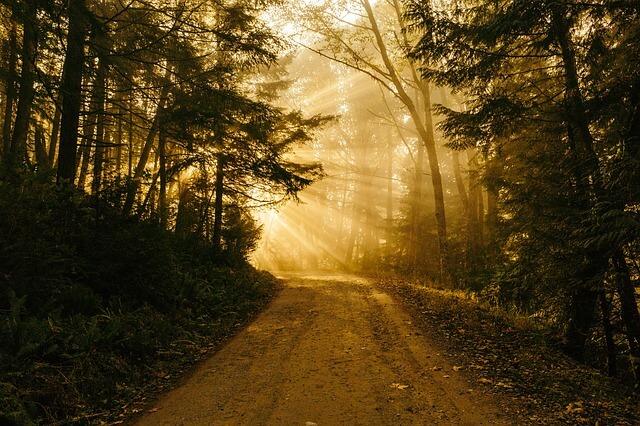 זריחה ביער