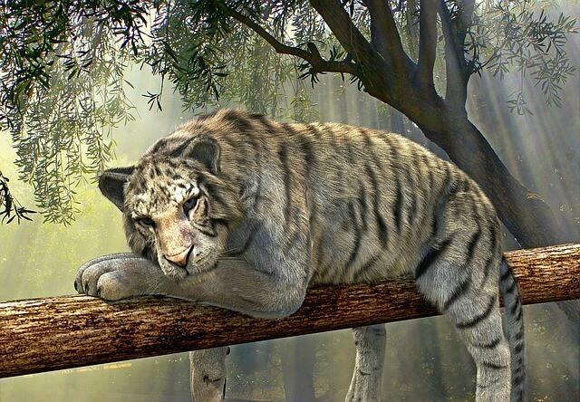 טיגריס על עץ