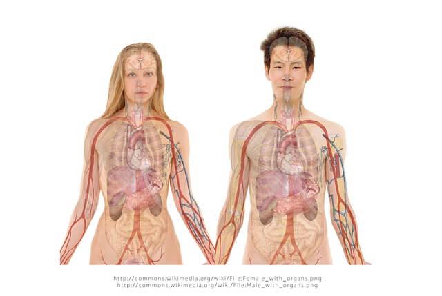 גוף האדם