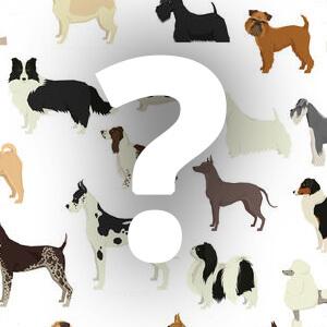 זיהוי כלבים- משחק חדש