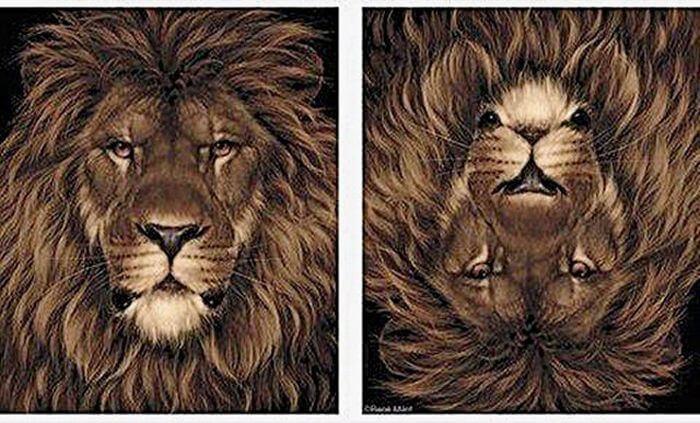 אריה או ארנב