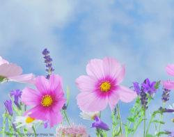 כרטיס ברכה עם פרחי...